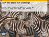 SAP and Zebra Technologies: A New Business Opportunity for Partners