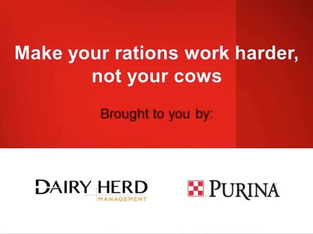 Make Your Rations Work Harder, Not Your Cows