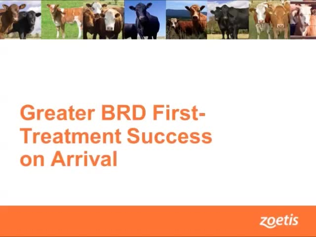 Greater BRD First - Treatment Success on Arrival