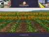Sulphur Enhances Plant Nutrient Use Efficiency