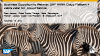 Business Opportunity Webinar: SAP HCP + Zebra Zatar IoT Cloud Service