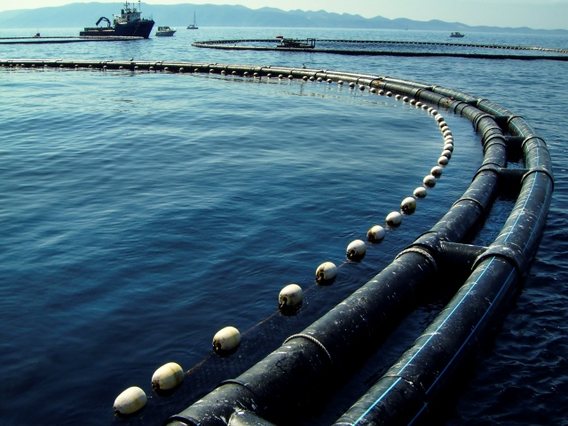 Investment opportunities in aquaculture
