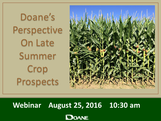 Doane's Perspective on Late Summer Crop Prospects