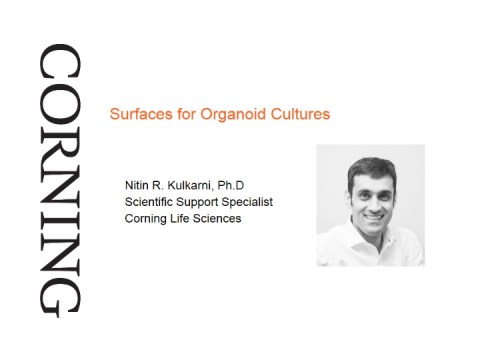 Surfaces for Organoid Culture
