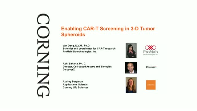 Enabling CAR-T Screening in 3D Tumor Spheroids