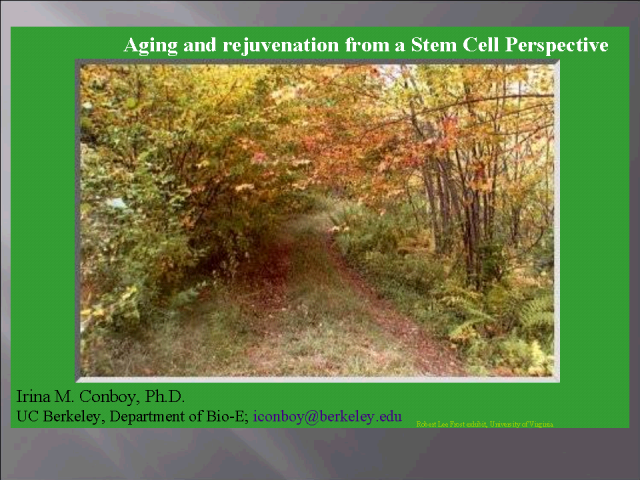 Delaying the onset of aging via rejuvenated stem cell responses