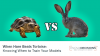 When Hare Beats Tortoise: Knowing When to Train Your Models