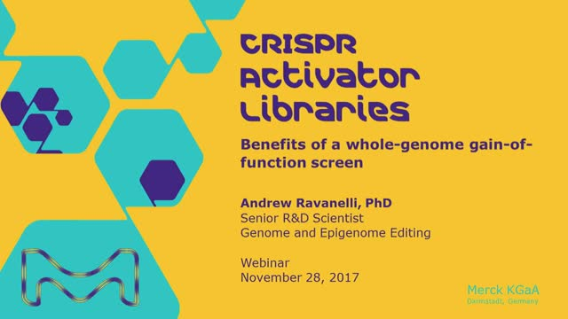 CRISPR Activator Libraries: Benefits of a whole genome gain-of-function screen
