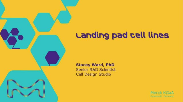 Generation of a landing-pad T cell line useful for T cell receptor customization