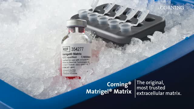 Short Tutorial: Corning® Matrigel® Matrix: Thin, Non-gelled Protein Layer Method