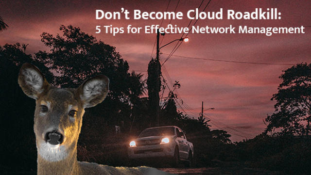 Don't Become Cloud Roadkill: 5 Tips for Effective Network Management