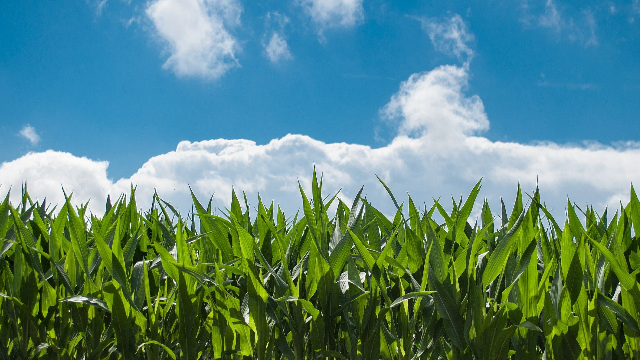 Transforming the Future of Ag with Crop Modeling