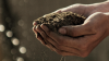 The Story of Soil Carbon