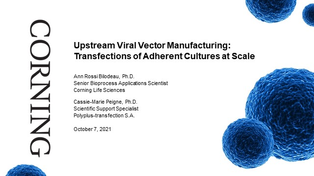 Upstream Viral Vector Manufacturing: Transfections of Adherent Cultures at Scale