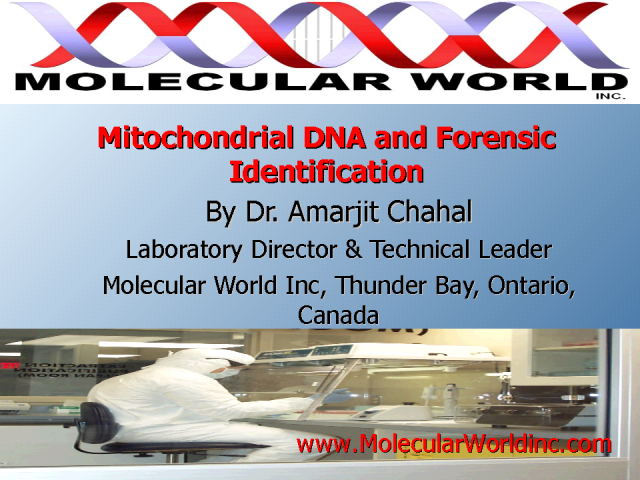 Mitochondrial DNA and Forensic Identification